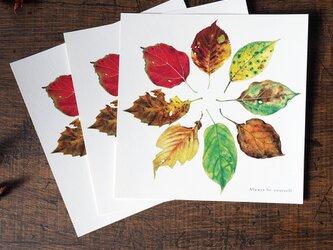 美しい葉のポストカード 正方形の画像
