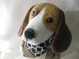 動物シリーズ「ビーグル犬の紳士」の画像
