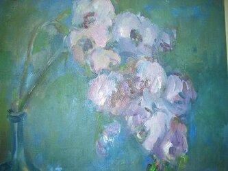 花 (胡蝶蘭)の画像