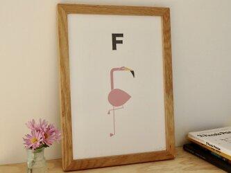 F for Flamingo A4サイズポスター(A3サイズあり!)の画像