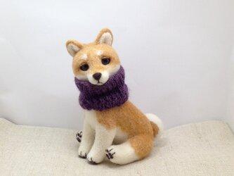 ★お座り柴犬さんの画像