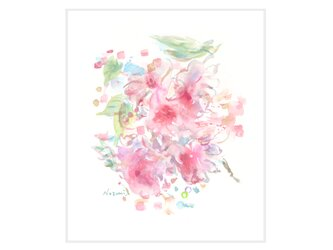 『桃色』の画像