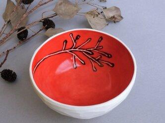 小鉢 red small bowl (plants) 小の画像