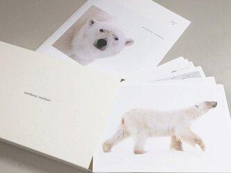 ホッキョクグマのポストカードセット(12枚入)の画像