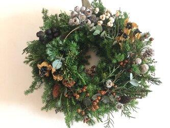 森の中の木の実のクリスマスの画像