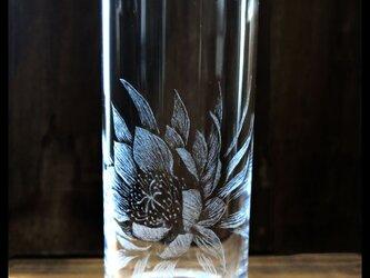 グラス--月下美人の画像