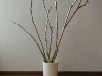 6本セット(鉢はつきません)drift wood素材 インテリアなどに人気です!の画像