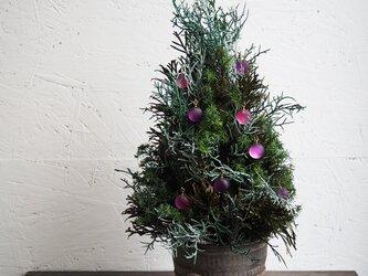 クリスマスツリー ご予約品の画像