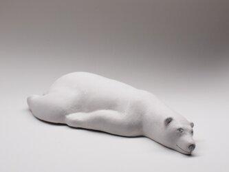 シロクマ 31  Polar bear 31の画像