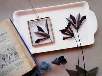 植物標本 ■押し花フレーム ガーランド■Square クレマチス グラベティーの画像