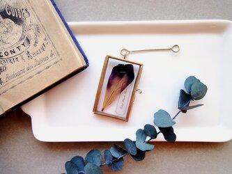 植物標本 ■押し花フレーム ガーランド■Short Slim チューリップ ブラックヒーローの画像