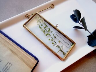 植物標本 ■押し花フレーム ガーランド■Long Slim マメグンバイナズナの画像