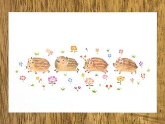 """4枚セット。絵本のような。ポストカード """"うりぼうたちの楽しいおさんぽ"""" PC-412の画像"""