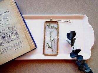植物標本 ■押し花フレーム ガーランド■Long Slim ミシマサイコの画像