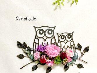 プリザーブドフラワーPair of owlsの画像