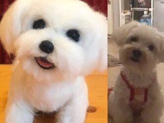羊毛フェルト☆オーダー 25cm ペット 愛犬 愛猫の画像