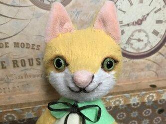 ビスコースの黄色猫 ルークの画像