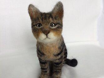 受注制作 羊毛フェルト猫の画像