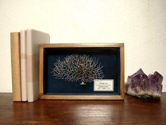 軟質珊瑚の骨格標本(白)その五。の画像