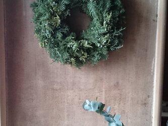 フレッシュグリーンのクリスマスリースの画像