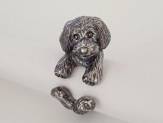 犬リング トイプードル テディベアカットモデルの画像