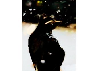 雪  アートポスターの画像
