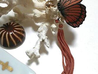蝶のピアス 大 (マダラ系)の画像