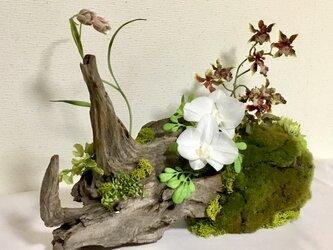 天然流木アート 仙千代の画像
