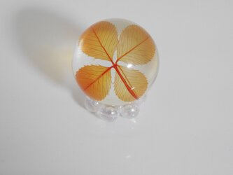 四つ葉ドロップ M (オレンジ)の画像