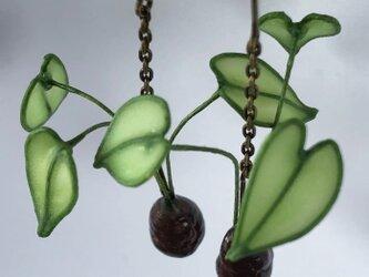 ハワイの植物ピアス * Kalo * Garden007の画像