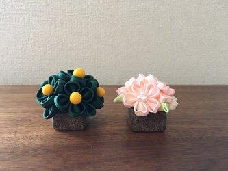 桜橘 (ろ) 雛飾りの画像