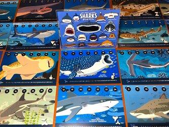 2019サメ図鑑カレンダーの画像