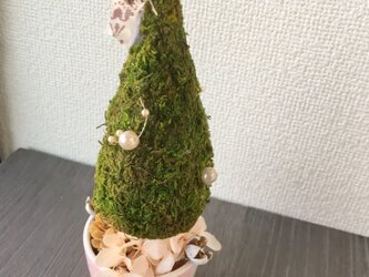 三角モスとピンクのミニクリスマスツリー【プリザ+ドライ】の画像