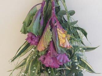 葉牡丹の春を呼ぶスワッグ♬の画像