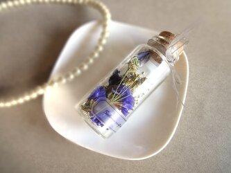 植物標本 Botanical Collection■the little garden■スイートピーの紫の庭の画像