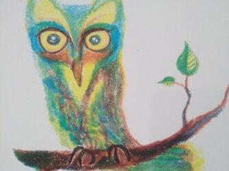 森の哲学者 コノハズクの画像
