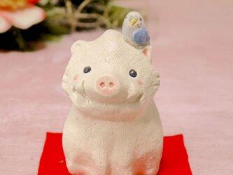 2019年干支の陶器の置物 亥の小鳥「お座り猪とセキセイインコ」の画像