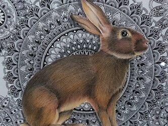 最新作 原画 肉筆 一点もの ボールペンアート 額装付き 百貨店作家 ボールペン画 絵画 野うさぎ 野ウサギ うさぎ ウサギの画像