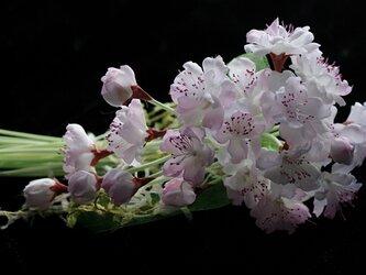 桜のコサージュ E-1 の画像