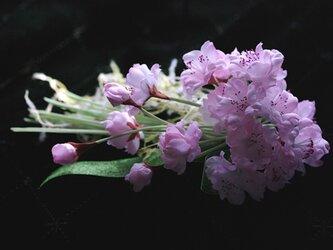 桜のコサージュE-3の画像