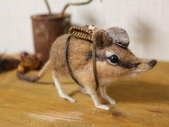 ハネジネズミのさんぽ*の画像