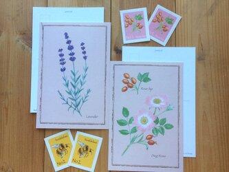 ボタニカル ポストカード & 切手風シール/ラベンダーと蜂・ローズとローズヒップ(各2枚)花 植物画の画像