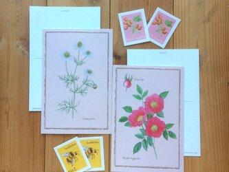 ボタニカル ポストカード & 切手風シール/カモミールと蜂・ローズとローズヒップ(各2枚)花 植物画の画像