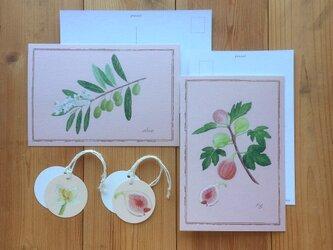 ボタニカル ポストカード & タグ/オリーブとオリーブの花・無花果と無花果の花(各2枚)果物 果実 植物画の画像