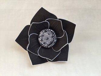 白い縁取りの薔薇の画像