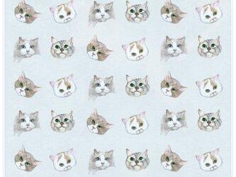 猫のシールの画像