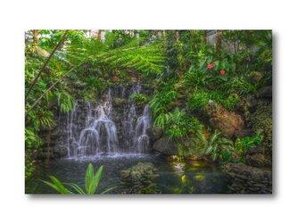 【写真のみ】Botanical Garden【A4 送料無料 アートフォト】テキスト挿入のオーダー承りますの画像