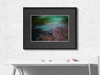【額装写真】枝桜【A4 アートフォト】テキスト挿入のオーダー承りますの画像