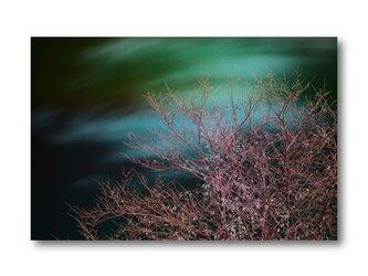 【写真のみ】枝桜【A4 送料無料 アートフォト】テキスト挿入のオーダー承りますの画像