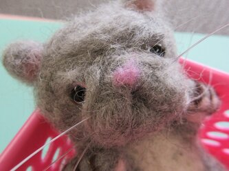 羊毛にゃんこ(エキゾチックショートヘア)の画像